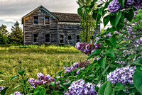 Old House & Lilacs
