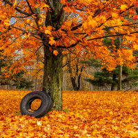 Fallen Leaves & Tire Swing